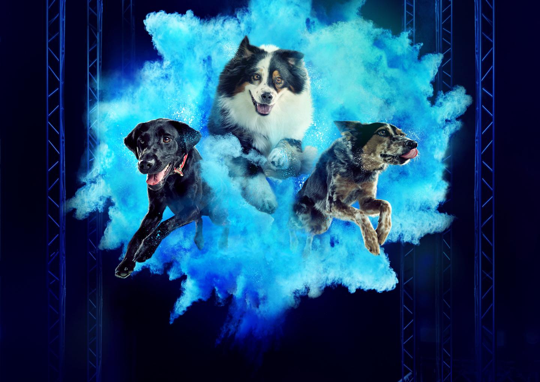 America's Top Dog header image